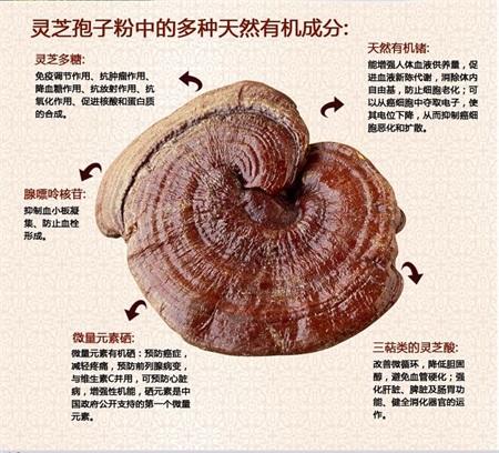 石景山孢子粉质量保证