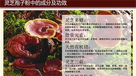 镇江灵芝孢子粉批发产地直销