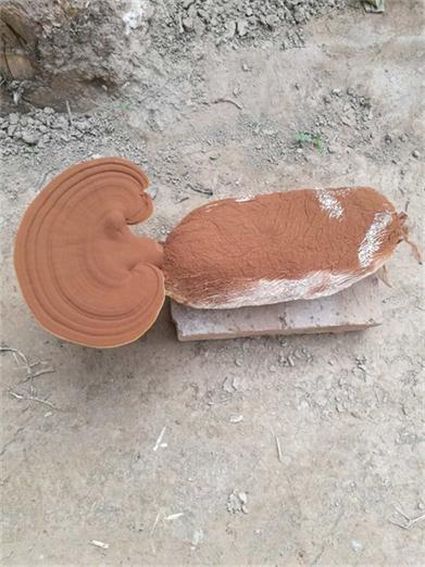 灵芝孢子粉销售价格