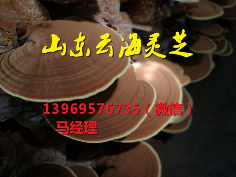 云海灵芝种植专业合作社